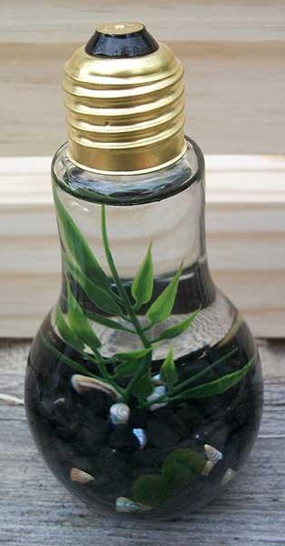 double marimo lightbulb aquascape with black gravel