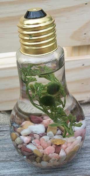 double marimo lightbulb, rose gravel