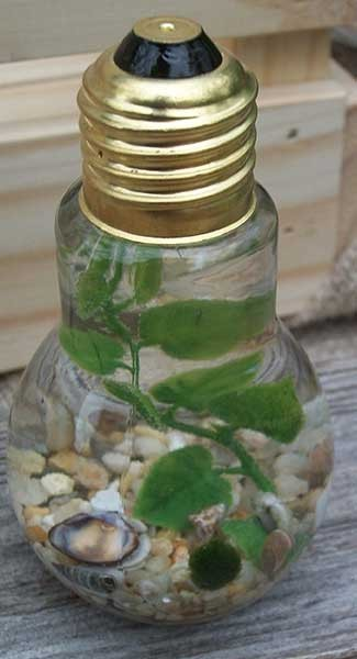 double marimo lightbulb aquascape with tan gravel