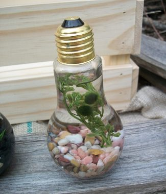 double marimo lightbulb in rose