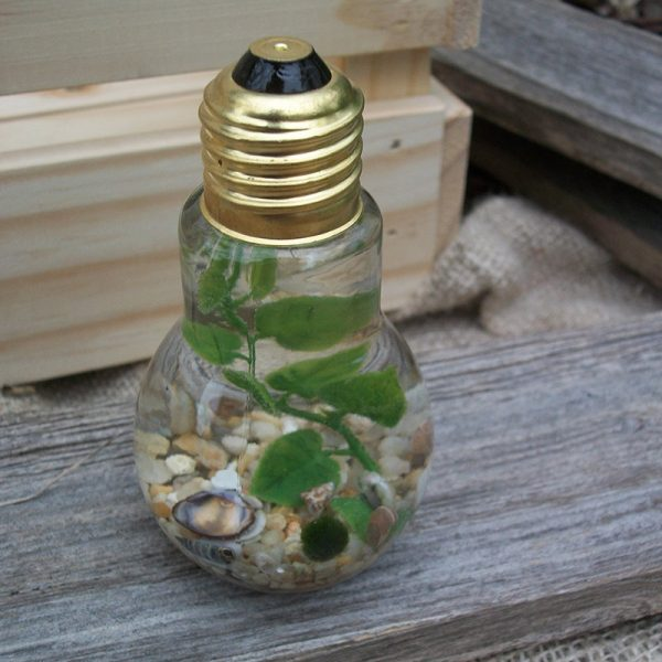 lightbulb single marimo jar with tan gravel