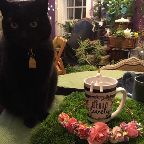 Unicorn Tea Infuser and cat