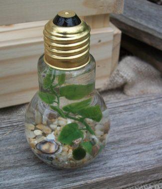 lightbulb single marimo jar with tan gravel