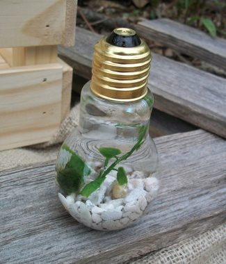 lightbulb single marimo jar with white gravel
